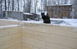Дома помогают собирать 6 котов :)