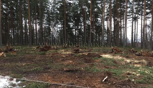 В пятно застройки попало несколько деревьев, расчищаем участок.