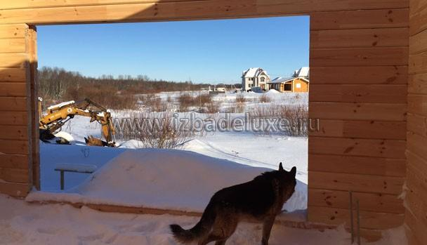 Собака пришла поохранять дом :)