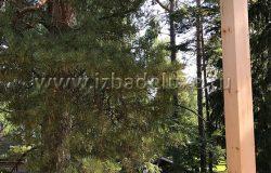 Лесные участки - волшебные!