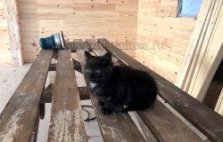 Готовы отдать в Хорошие руки! С приданным - большим мешком корма. Можем с доставкой! :) Посмотрите, какие глазки красивые у котика!