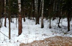 Очень живописный лесной участок! Красивое место :)